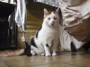 verhuizen-kat-kattenherplaatsing-voorlichting-chloe