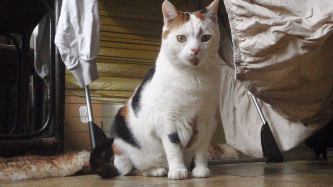 verhuizen-kat-kattenherplaatsing-voorlichting-chloe-10-veelgestelde-vragen