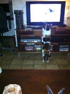 2012-04-09-chloe-tv-kijken-planet-kattenherplaatsing-kattenfeiten-kattenvoorlichting-tvkijken-dieren-honden-katten