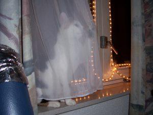 chloe-kerstmis-vitrage-kattenherplaatsing