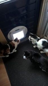 goed-afgericht-personeel-wacht-kattenluik-opendoen-kattenherplaatsing-leren