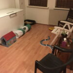 kamer-opvang-poes-kat-kattenvoorlichting (3)