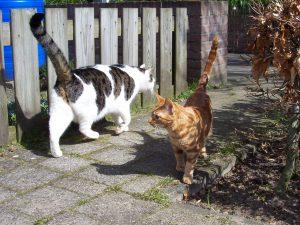 katten-vriendelijke-ontmoeting-straat.