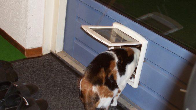 leren-kattenluik-kat-katten-voorlichting-gratis-kattenherplaatsing (2)