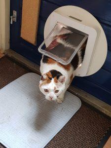 leren-kattenluik-kat-katten-voorlichting-gratis-kattenherplaatsing (4)