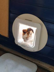 leren-kattenluik-kat-katten-voorlichting-gratis-kattenherplaatsing (6)
