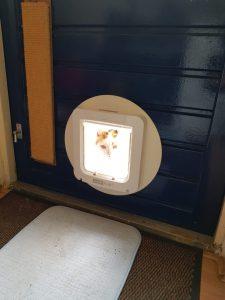 leren-kattenluik-kat-katten-voorlichting-gratis-kattenherplaatsing (7)