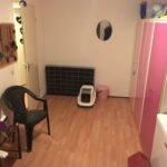 kamer-opvang-poes-kat-kattenvoorlichting-schoonmaak-van-de-opvangkamer-voor-katten