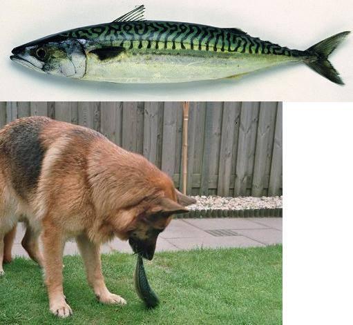 nrv-rauwe-voeding-hond-kattenvoorlichting-kattenherplaatsing