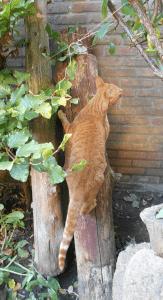 paco-tuin-kattenherplaatsing-kat