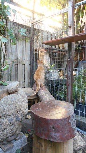 paco-tuin-kattenherplaatsing-kater