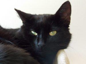 sneep-blacky-zwarte-kat-foto-nienke-flipsen
