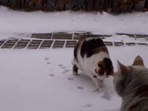 sneeuw-poezen-sneeuwpret-fotograaf-nienke-flipsen (2)