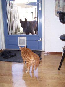 sona-gino-kattenluik-eng-kattenherplaatsing-leren
