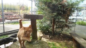 herplaatsing-paco-pension-kattenherplaatsing