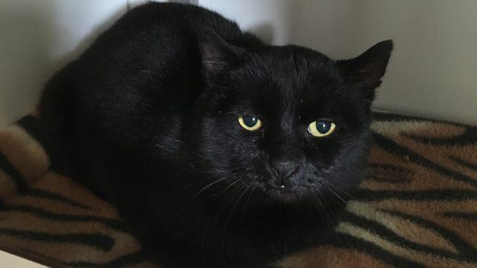 bange-kat-manege-buitengebied-muizenjager-kattenherplaatsing-katten-houden-niet-van-veranderingen