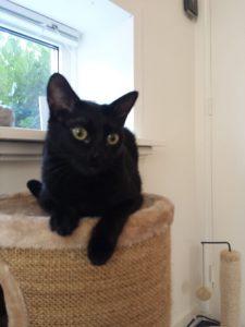 bowie-herplaatsing-poes-kattenherplaatsing (1)