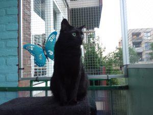 bowie-herplaatsing-poes-kattenherplaatsing (2)