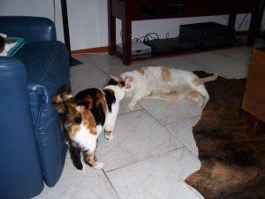 kattenherplaatsing-kattenvoorlichting-kat-kitten-begroeting-vriendelijk