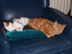 kattenherplaatsing-kattenvoorlichting-kat-kittens-samen-slapen