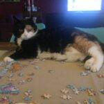 succesvolle-kattenherplaatsingen-oma-poes-gennep-kattenherplaatsing-wachtlijstmatch3