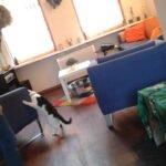 succesvolle-herplaatsing-kat-wachtlijstmatch-freddy (5)