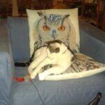 succesvolle-herplaatsing-kat-wachtlijstmatch-freddy (7)