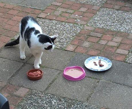 tonick-keuzestress-etensbakjes-teveel-keus-kat-kattenvoorlichting