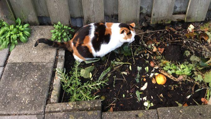 chloe-plassen-compostkuil-kattenvoorlichting-poes-plassen-sproeien