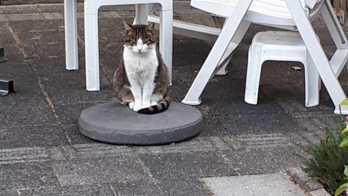 kitty-nijmegen-poes-thuis-gezocht-kattenherplaatsing
