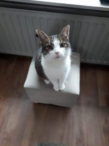 kitty-nijmegen-poes-thuis-gezocht-kattenherplaatsing3