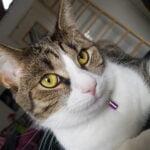 noxy-kattenherplaatsing-kat