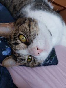 noxy-kattenherplaatsing-kat-foto2