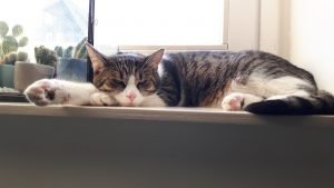 noxy-kattenherplaatsing-kat-herplaatsing-thuis-gezocht