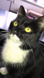 Vayenne-herplaatsing-kat-kattenherplaatsing (3)