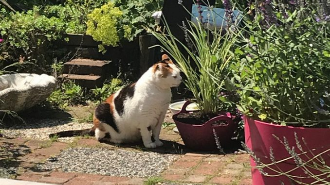 chlorophytum-saunderisiae-chloe-kattenvoorlichting
