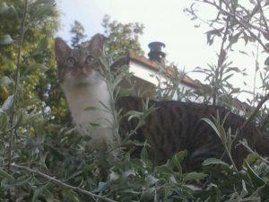 juli2012-perenboom-muppet-kattenherplaatsing
