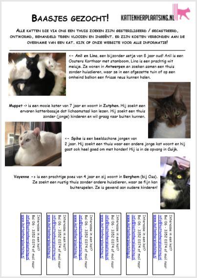 kattenkrant-maart-2019-kat-zoekt-thuis-kattenherplaatsing-een-terugblik-op-het-eerste-half-jaar