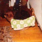 kitt-teckel-1986-marieke-van-de-weijer-kattenherplaatsing