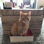 loki-doos-kattenherplaatsing