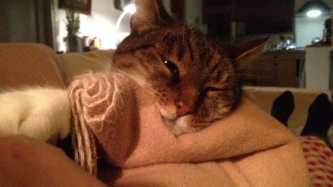 muppet-herplaatsing-kat-kattenherplaatsing (2)