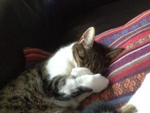 muppet-herplaatsing-kat-kattenherplaatsing (3)