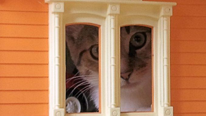 muppet-herplaatsing-kat-kattenherplaatsing