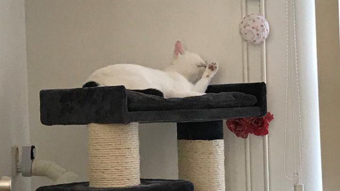 spike-2e-dierenartsrekening-opvang-kattenherplaatsing-inzamelingsactie