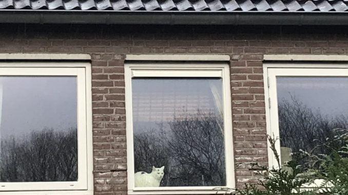 spike-buiten-kijken-raam-kattenherplaatsing