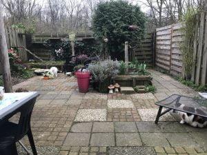 spike-chloe-kattenherplaatsing-tuin