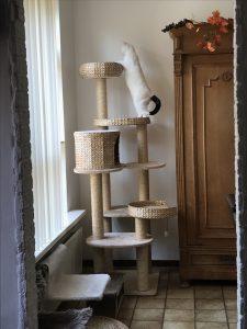 spike-chloe-tuin-spelen-kattenherplaatsing (16)
