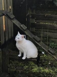 spike-chloe-tuin-spelen-kattenherplaatsing (2)