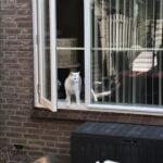 spike-chloe-tuin-spelen-kattenherplaatsing (6)