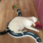 spike-dol-op-racebaan-valeriaan-kattenkruid-kattenherplaatsing